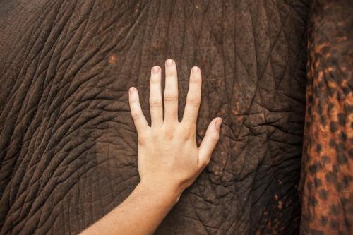 Éléphant - Thaïlande